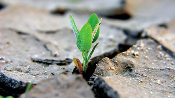 consumo-di-suolo_-1